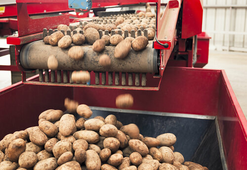 iStock-155393198 - potatoes.jpg